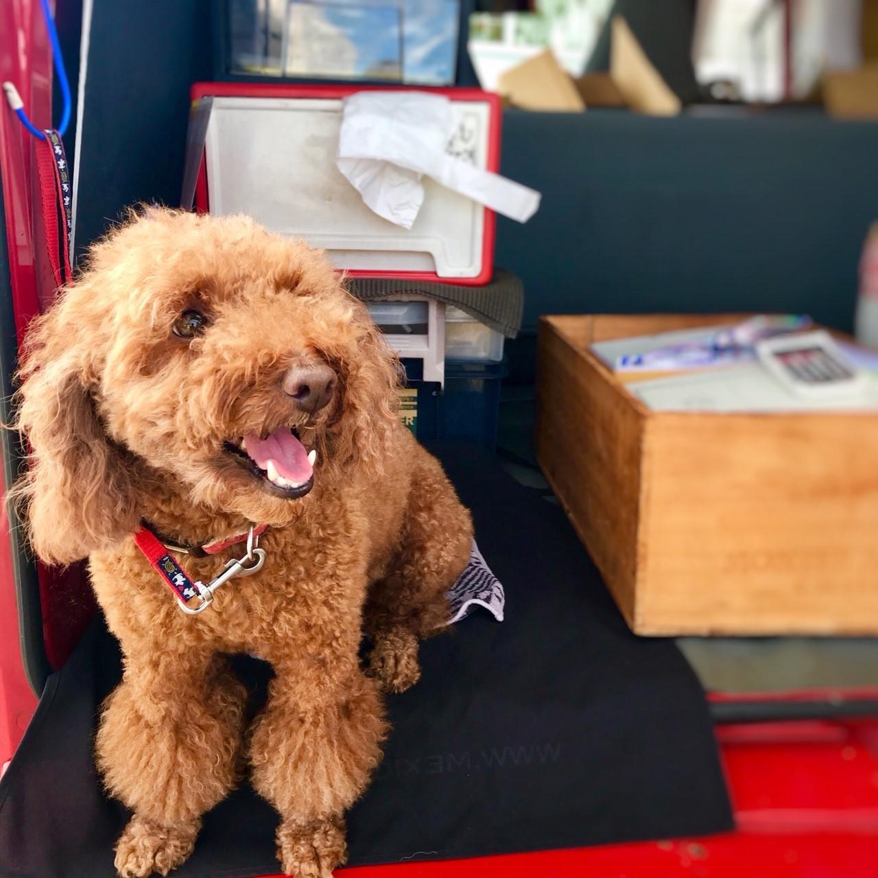 ル・ボスケの看板犬、エリちゃん。