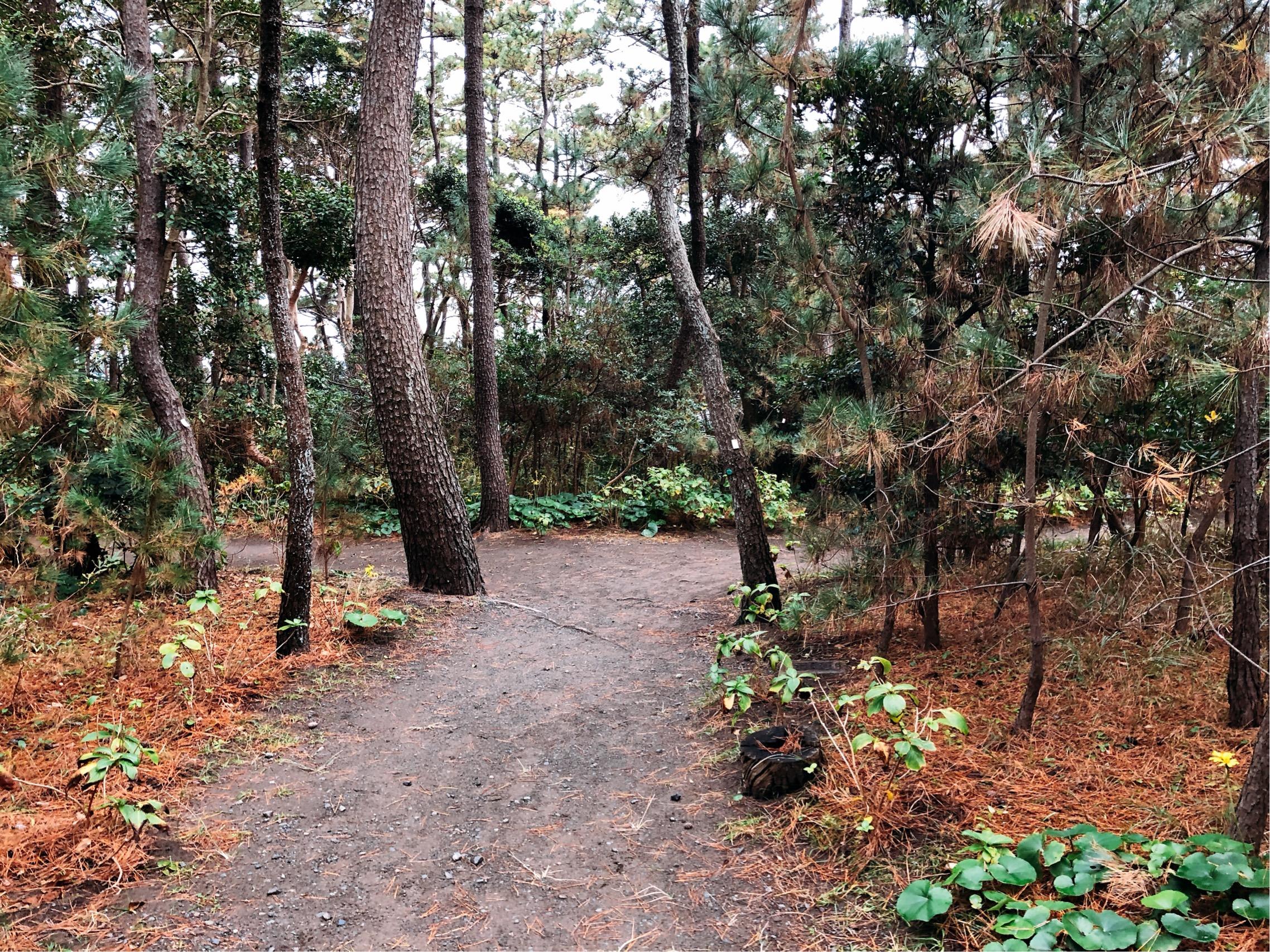 しおさい公園の小道。小道を抜けた先には何が待っているんだろう・・!