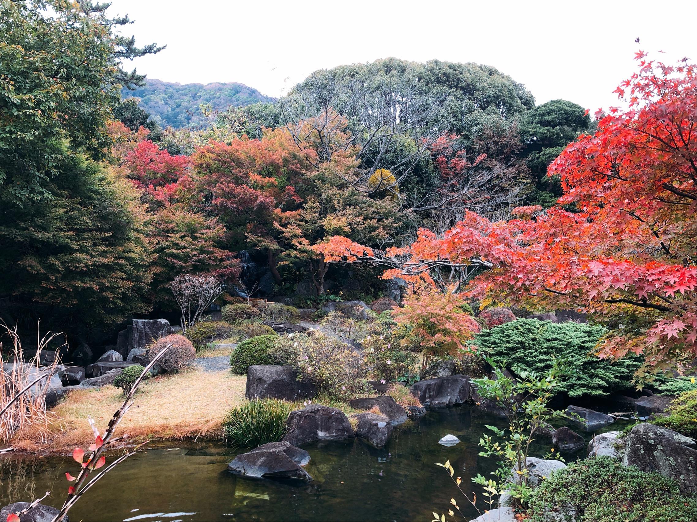しおさい公園の紅葉。まだ一部だけの色づきだが、池ごしの風景はとても風情がある
