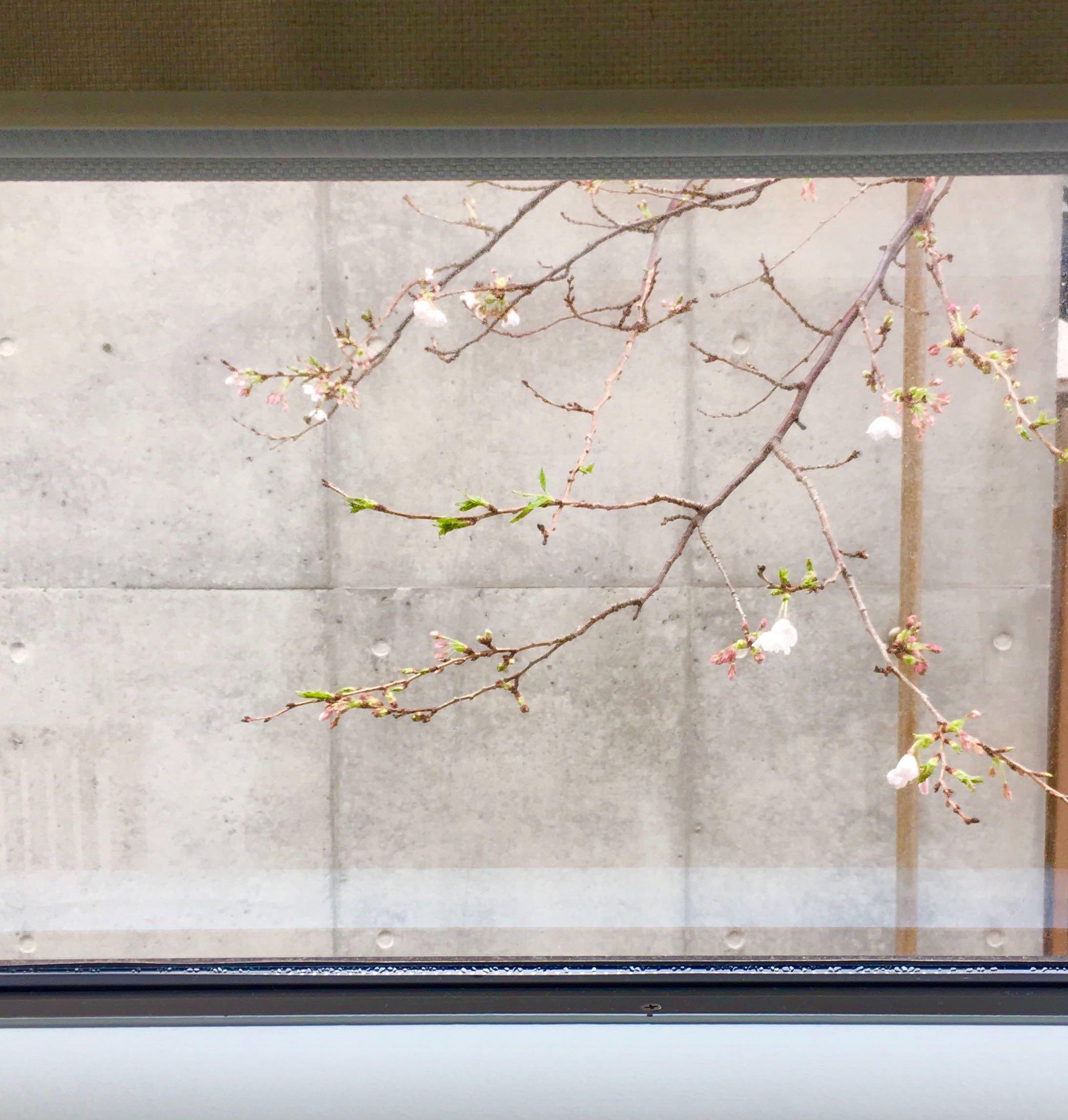 Minamo(水面)のベットルームから見える桜