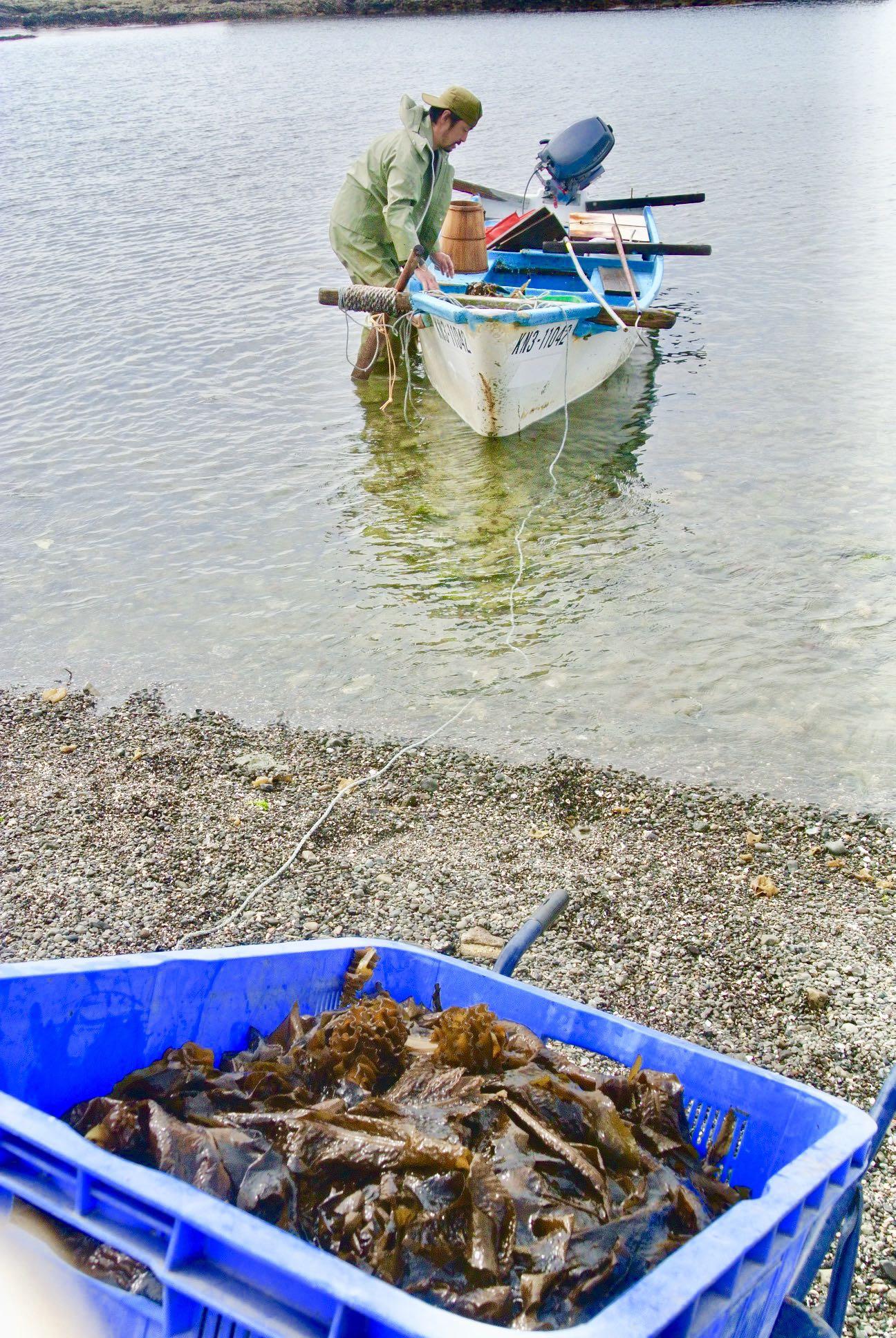 葉山名物、天然若芽漁は春のごちそうだ。舘野さんの船、「晃士丸」が漁から戻ってきた