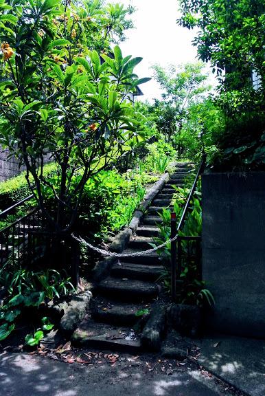 佐島石小道あたりの琵琶の木のある石段