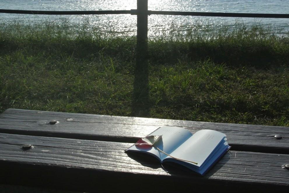 葉山公園のベンチで読む本は、最高の葉山時間だ。