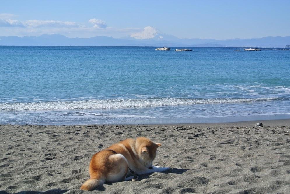 晴れわたる大浜海岸の地平線沿いウには富士山がみえる。浜では柴犬が気持ちよさそうに日なたぼっこをしている。