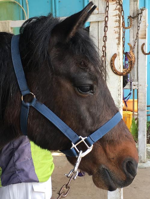 葉山まみあな牧場のお馬さん。馬の凛々しい横顔が美しい。