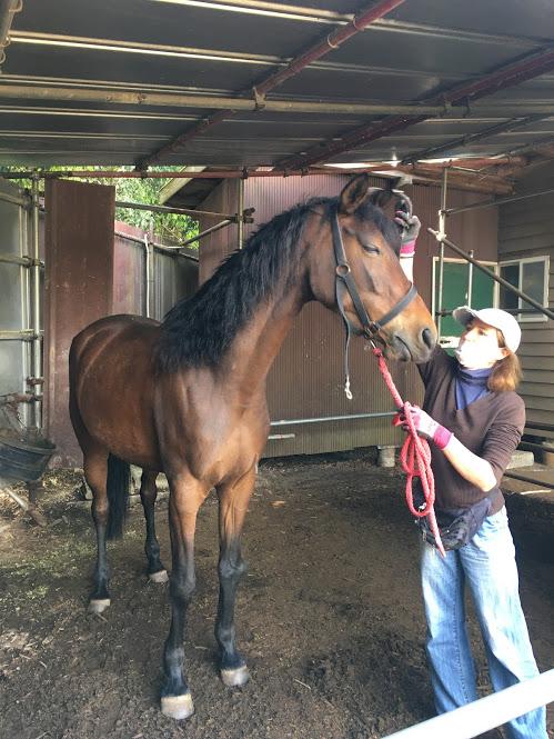 葉山まみあな牧場のお馬さん。