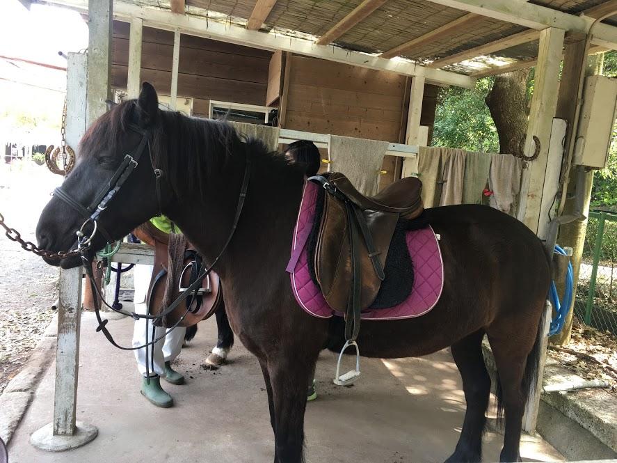 葉山まみあな牧場のお馬さん。騎乗する際の鞍。