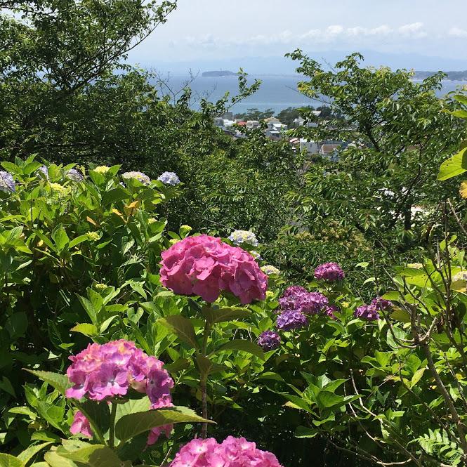 あじさい公園から見る江ノ島