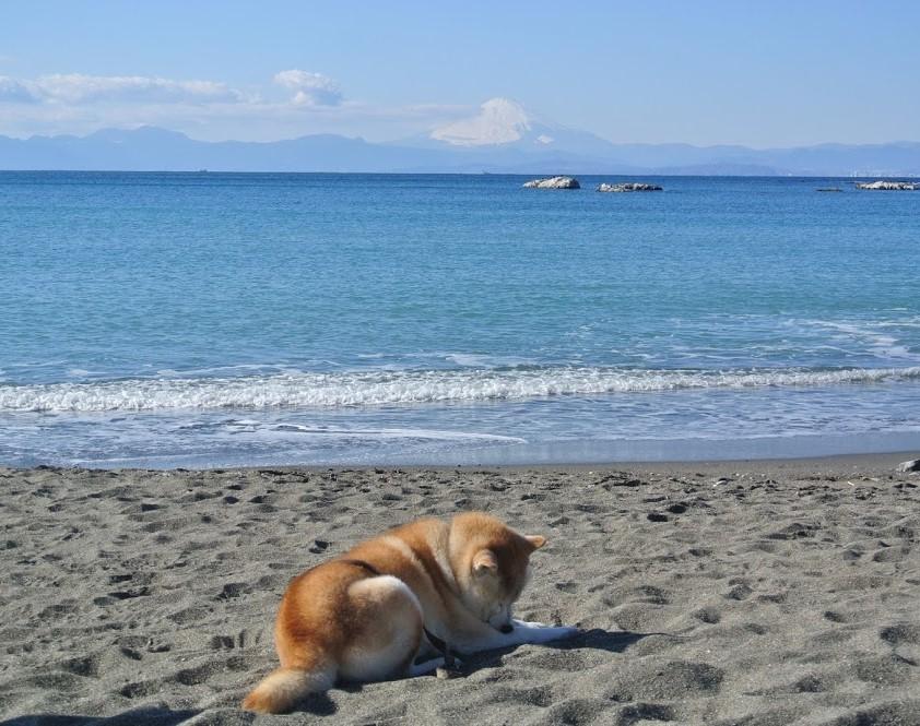 富士山と眠る犬