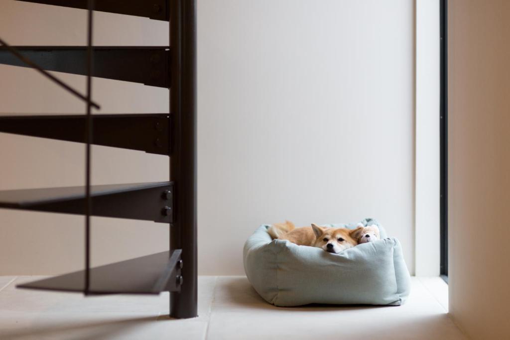 螺旋階段と寛ぐ犬